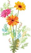Bouquet of Gerbera daisy and small green twigs of Asparagus aethiopicus: orange, red flowers, leaves, berries on white background, digital draw, illustration in watercolor style for design, vector