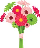 Bouquet of pink and green gerbera flowers. Vector illustration.