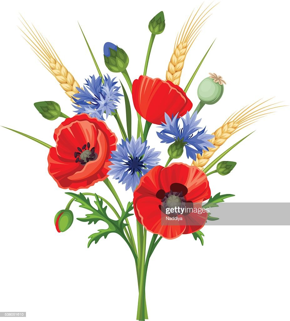 Bouquet of poppy flowers and cornflowers. Vector illustration.