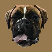 Boxer dog animal low poly design.