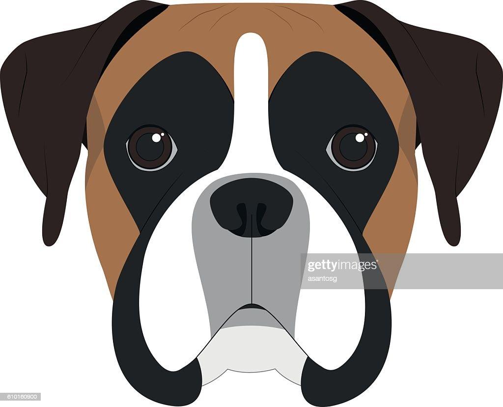 Boxer dog isolated on white background vector illustration