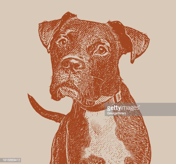 boxer dog with head cocked - dog pound stock illustrations