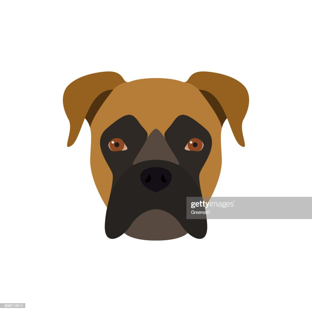 Boxer is a dog. Vector image of a dog's head.