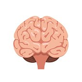 Brain front view icon