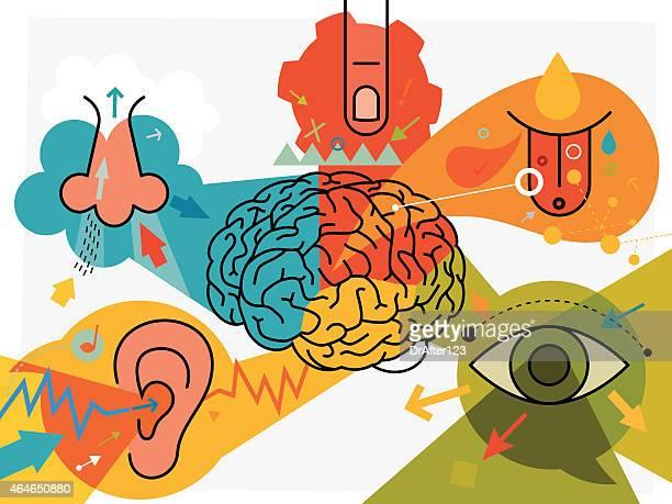 Brain Parts And Sensory Perception