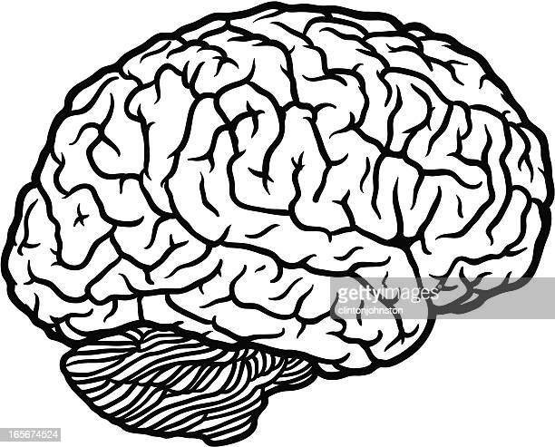 brain profile outline - frontal lobe stock illustrations, clip art, cartoons, & icons