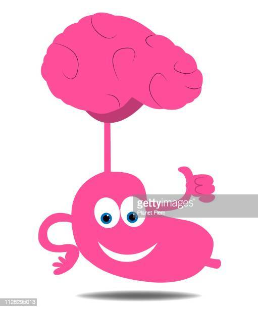 brain to stomach connection - abdomen stock illustrations