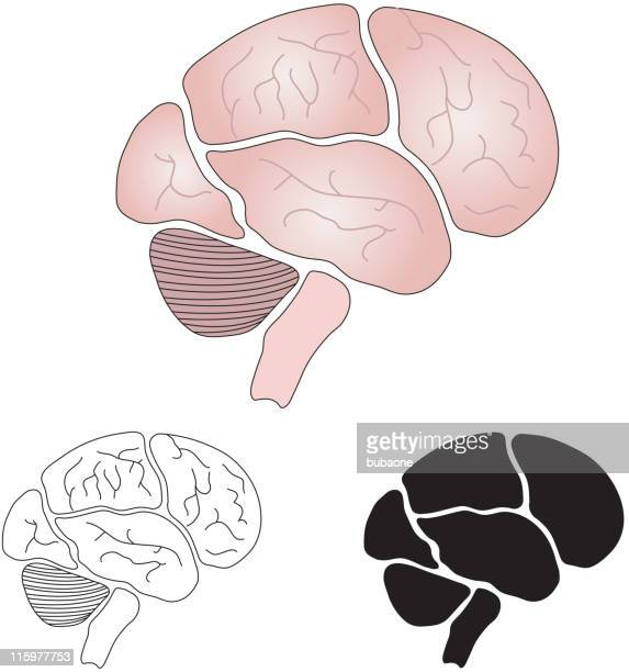 brain - temporal lobe stock illustrations, clip art, cartoons, & icons