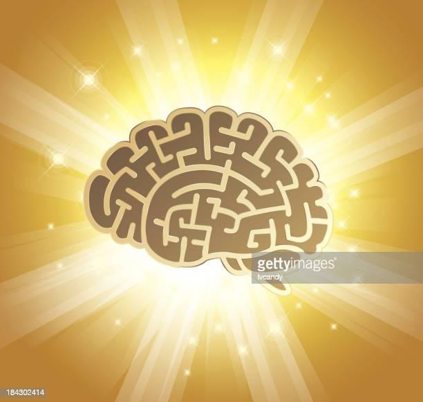 brain - gyrus stock illustrations