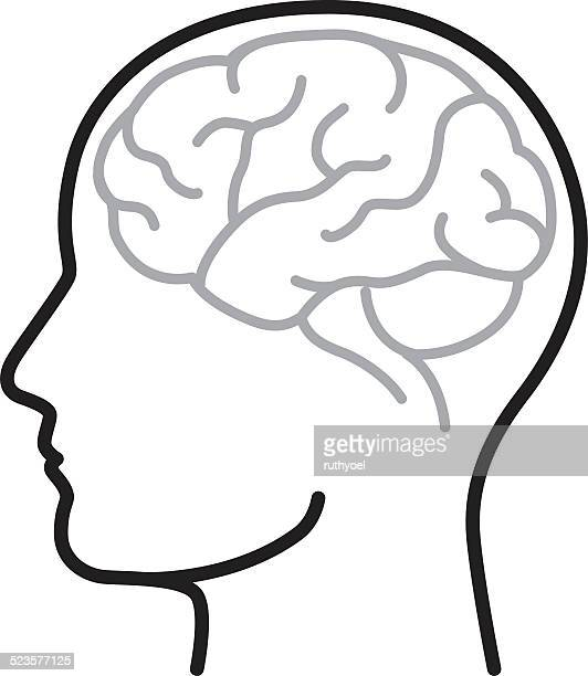 brain - side view stock illustrations