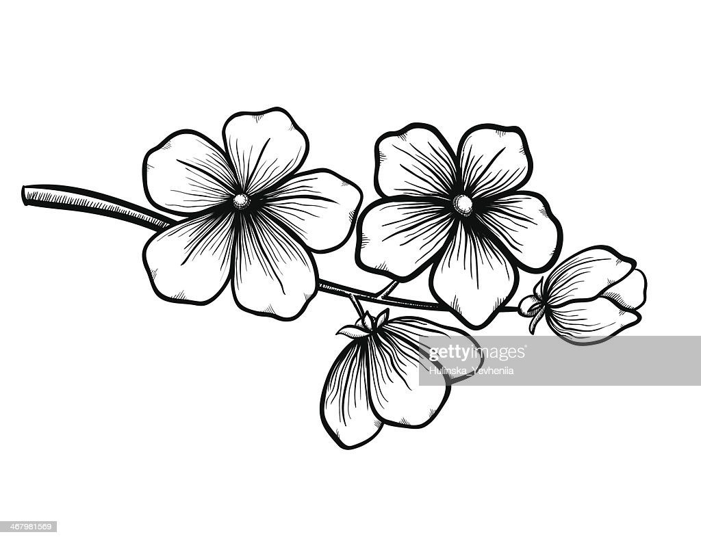 branch of a blossoming tree in graphic black white style,