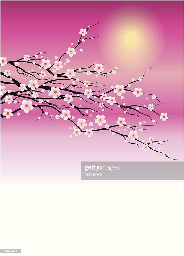 branch of cherry blossom sakura