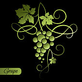 Branch of green grapes on black background. Decorative element from the vine.