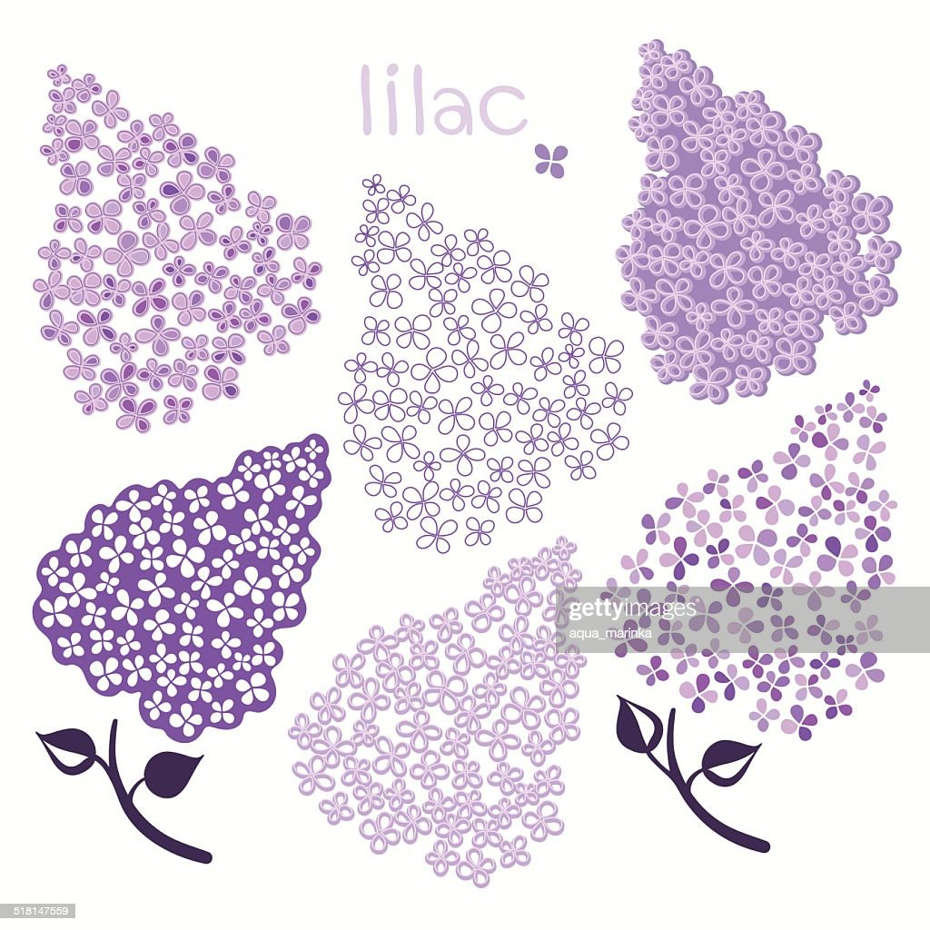 Branch of lilac isolated on a white background.