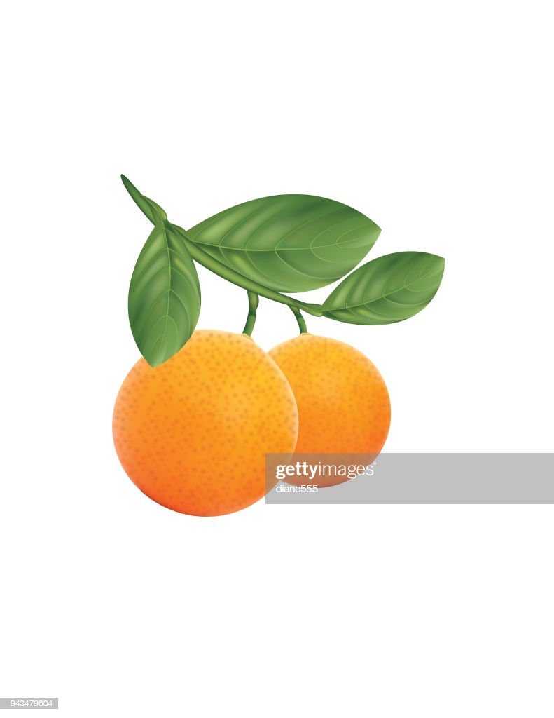 Branch of Oranges