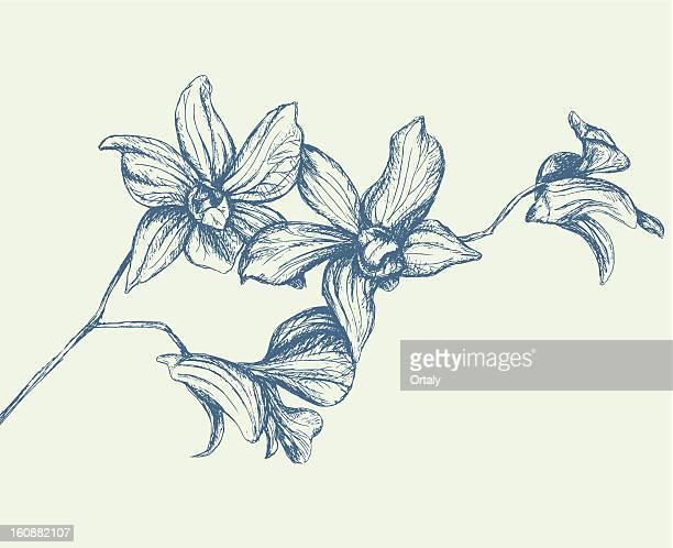 illustrazioni stock, clip art, cartoni animati e icone di tendenza di ramo di orchidee - orchidea