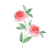 Branch of Roses. Vector