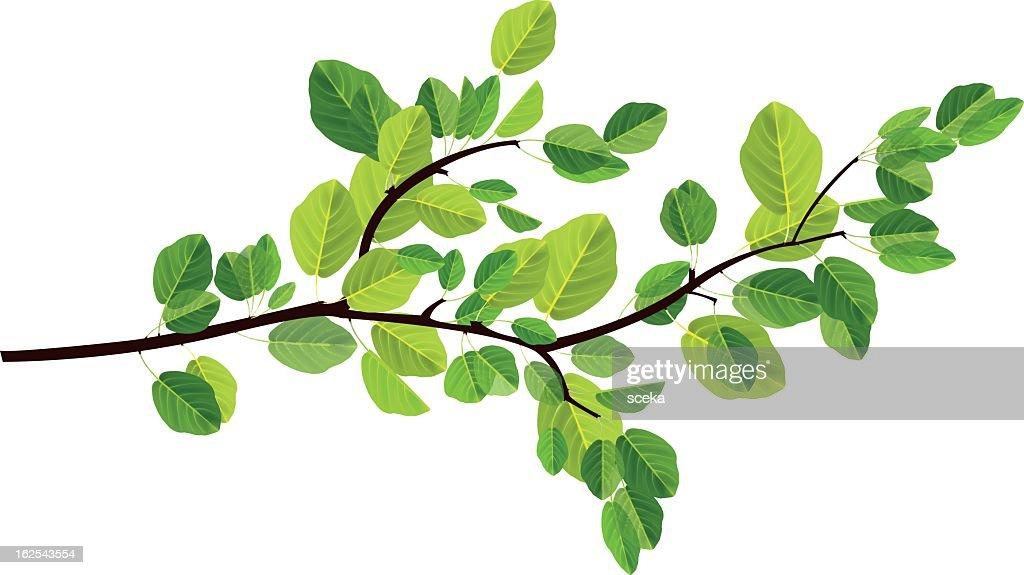 branch : stock illustration