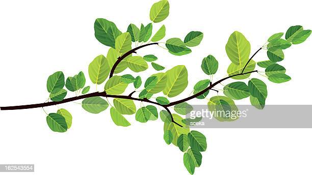 branch - leaf stock illustrations