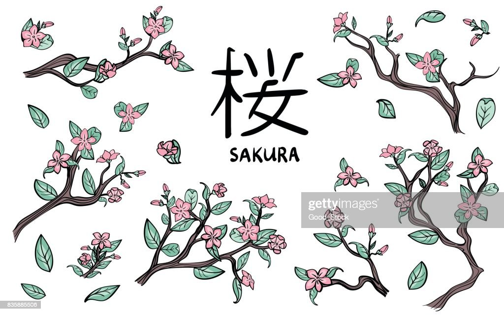 Branches of cherry blossoms. Pink sakura flowers. Vector illustration set, isolated on white.