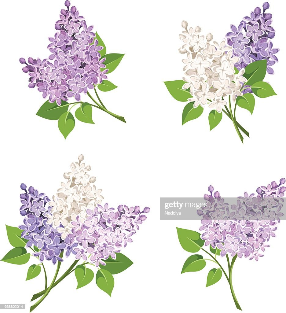Branches of lilac flowers. Vector illustration.