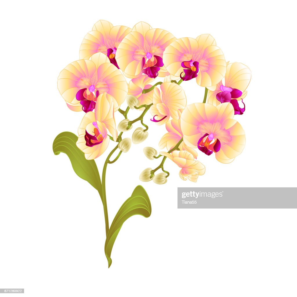 Branches Orchid Phalaenopsis Yellow Flowers Tropical Plants Green