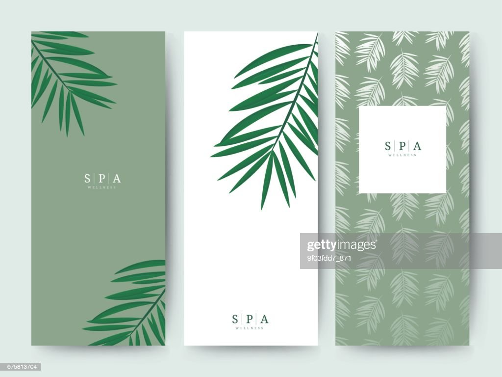 Branding Verpackung Palm Kokosnuss Bambus Baum Blatt Natur ...