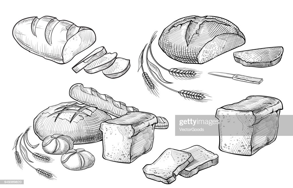 Bread vector hand drawn set illustration. Other types of wheat, flour fresh bread. Gluten food bakery engraved collection. Black bake organic food