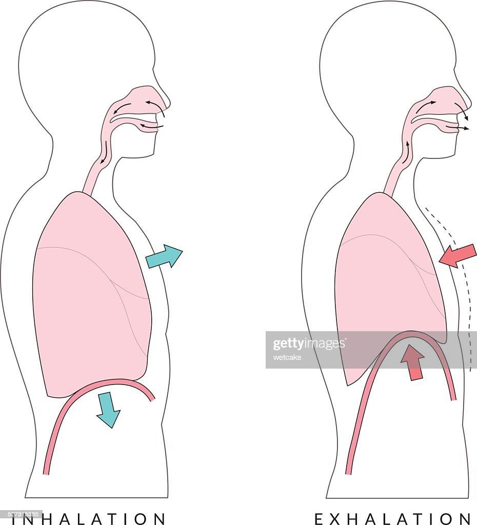 Breathing : stock illustration