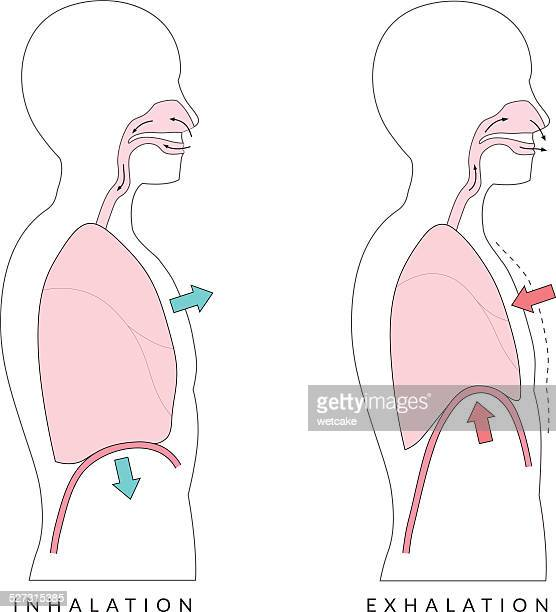 breathing - chest torso stock illustrations, clip art, cartoons, & icons