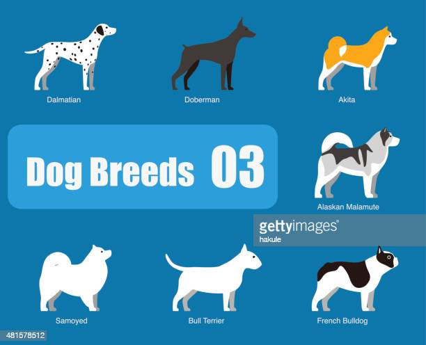 breeds of dog standing side, vector - animal body stock illustrations, clip art, cartoons, & icons