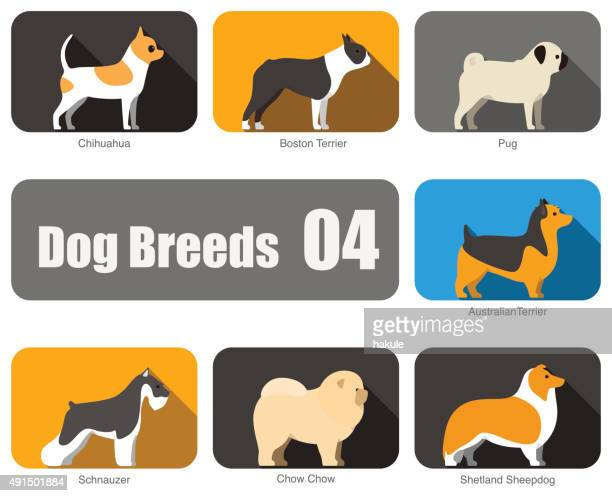 Breeds of dog standing side, vector