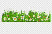 BrighGrass and flowers border, greeting card decoration element for Easter on a Transparent Background. Vector Illustrationt Juicy Green Grass on a Transparent Background. Vector Illustration