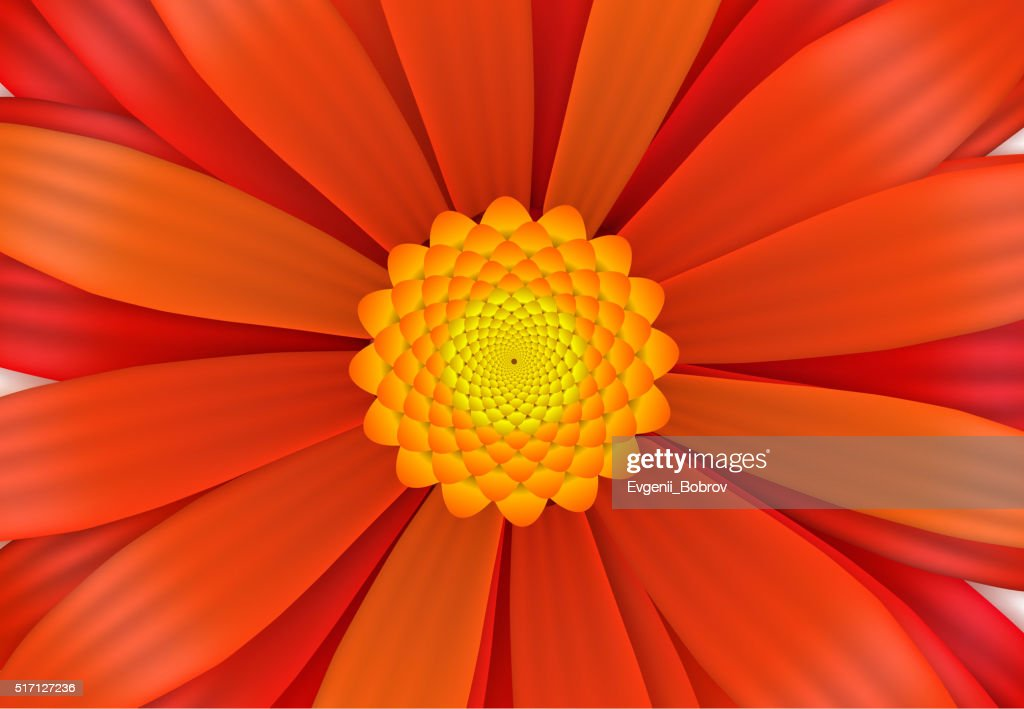 Bright red gerbera flower in bloom, a4 size