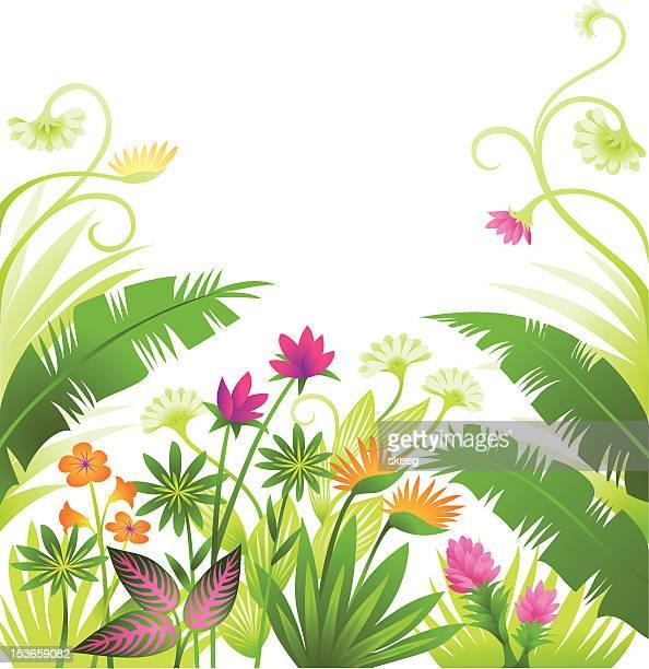 ilustrações, clipart, desenhos animados e ícones de plantas tropicais vivas - flowerbed