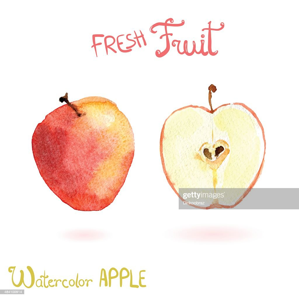Bright vector watercolor hand drawn fruit apple