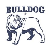 British bulldog mascot emblem illustration
