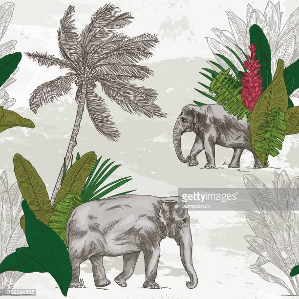 british colonial tropical elephant seamless pattern - tropical tree stock illustrations