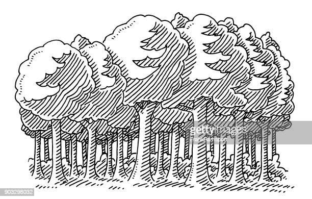 laubbäume baum wald zeichnung - konturzeichnung stock-grafiken, -clipart, -cartoons und -symbole
