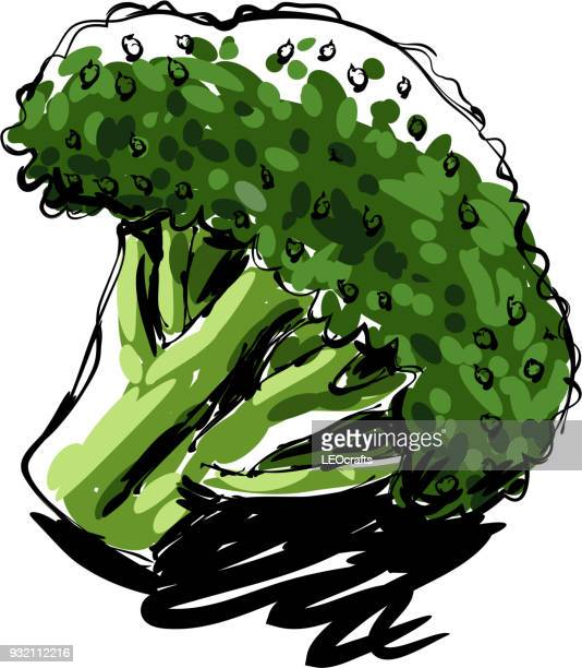 broccoli drawing - broccoli stock illustrations, clip art, cartoons, & icons
