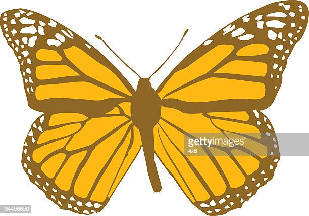 brown and orange butterfly - vector - knockout stock illustrations, clip art, cartoons, & icons