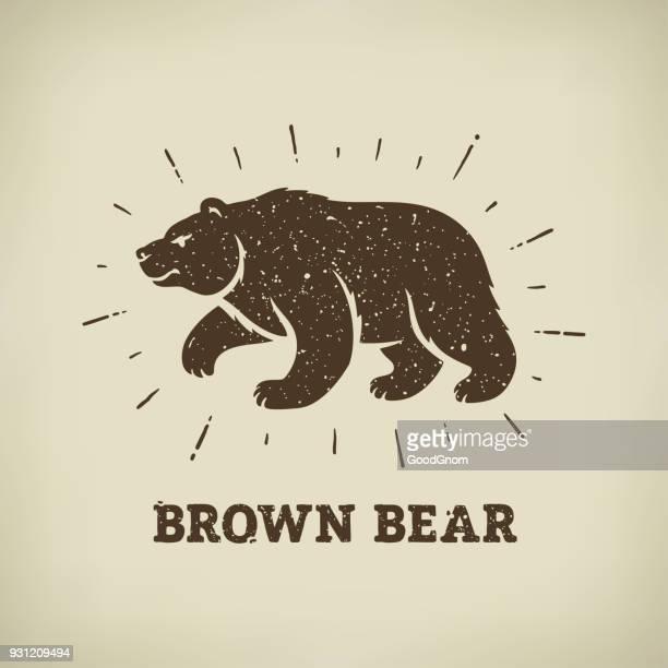 ilustraciones, imágenes clip art, dibujos animados e iconos de stock de brown oso  - oso pardo
