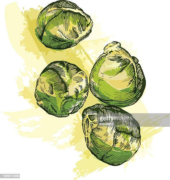 brussel sprouts - brussels sprout stock illustrations, clip art, cartoons, & icons