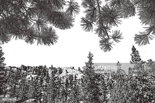 bryce canyon national park and ponderosa pine needles background - pen and ink stock illustrations