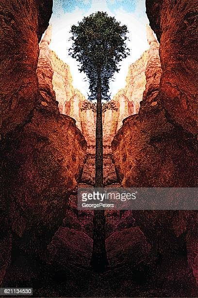 bryce canyon national park - ponderosa pine tree stock illustrations, clip art, cartoons, & icons