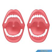 buccal cavity or oral cavity on the white background