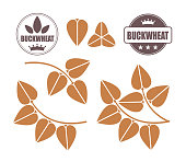 Buckwheat set. Isolated buckwheat on white background