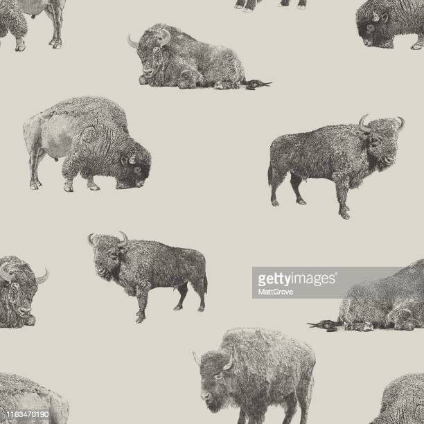buffalo & bison seamless repeat pattern - european bison stock illustrations, clip art, cartoons, & icons