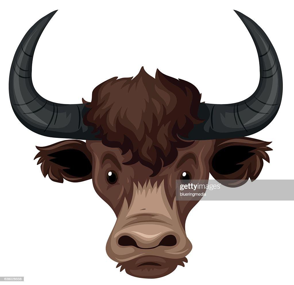 Buffalo head on white background