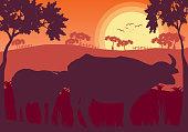 Buffalo sunset evening and grassland meadow landscape vector Illustrator